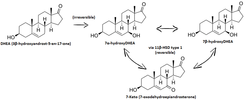 11 beta-hydroxysteroid dehydrogenases changing glucocorticoid action