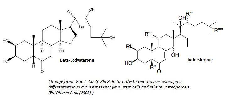 ecdysteroids testosterone