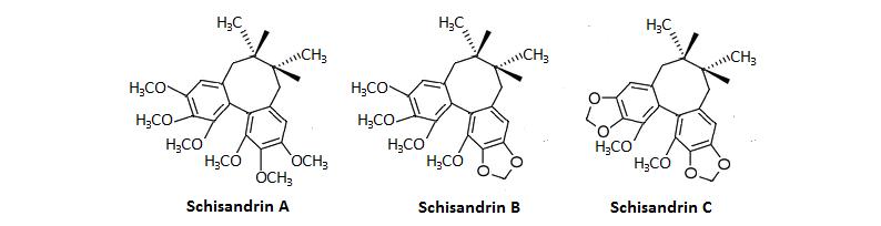 Schizandra Mechanism Lignans