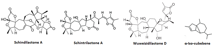 mechanism Triterpenoids